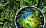 """cele-mai-periculoase-sase-alimente-–-sunt-""""bureti""""-de-bacterii-e.-coli,-salmonella"""